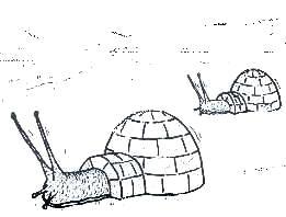 Iglumelcus